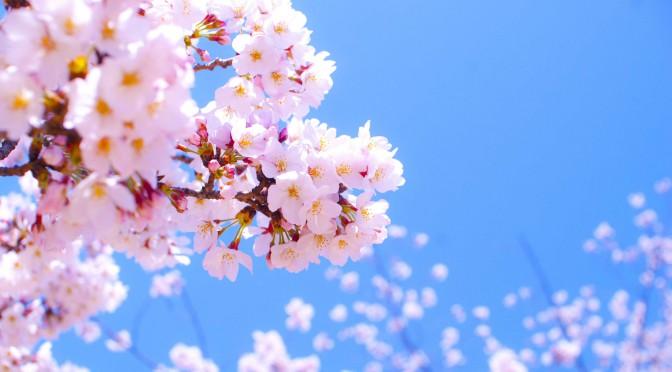 春にぴったりのスタイリング剤
